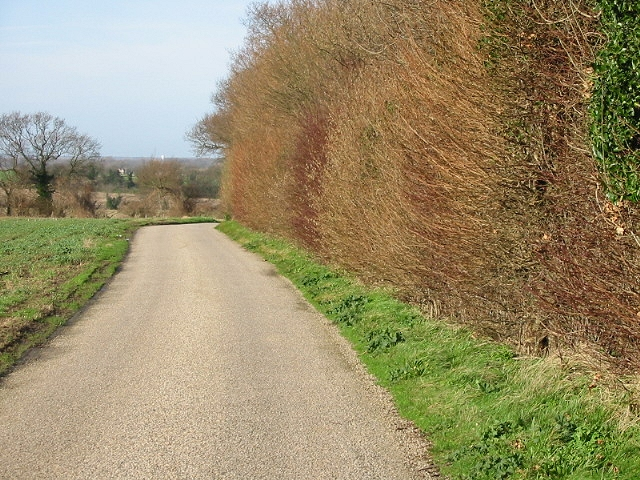 View along road and hedge near Brambling.