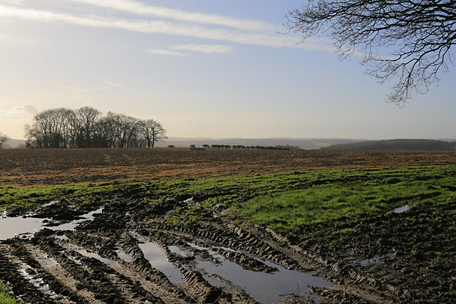 Fields and copse south of Gullet Wood
