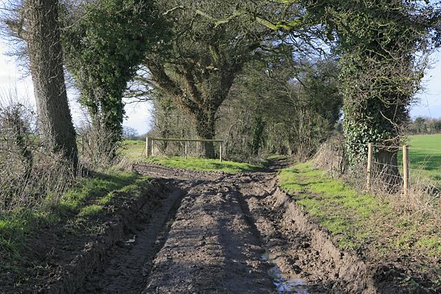 Gullet Lane north of  Ranscombe Farm
