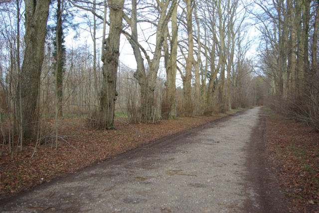 Lane to Dower House, West Harling Heath
