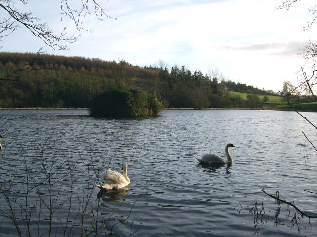 Falcondale Lake