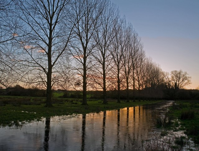 Poplars beside river Allen at Winter's sunset