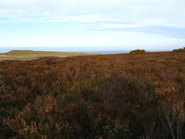 Moorland, Coldingham Common