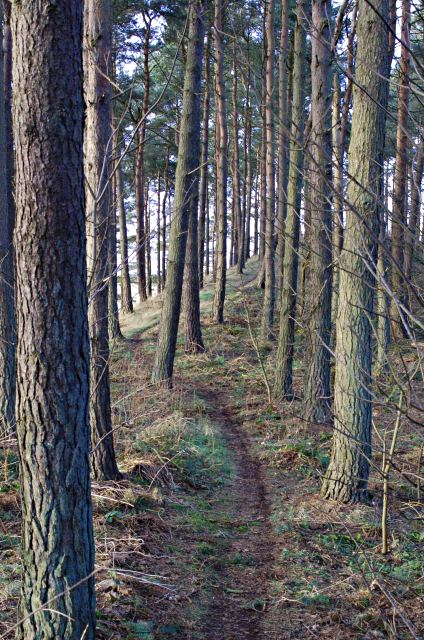 Links Wood