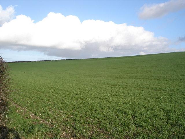 Farmland near Pimperne