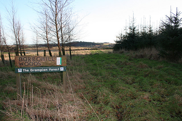Borrohill Woods looking southwards.