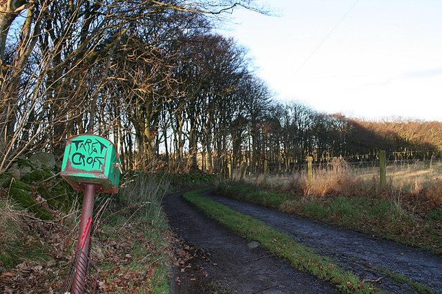 The lane to Tarfat Croft.