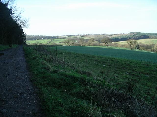 Field by Morning Springs wood