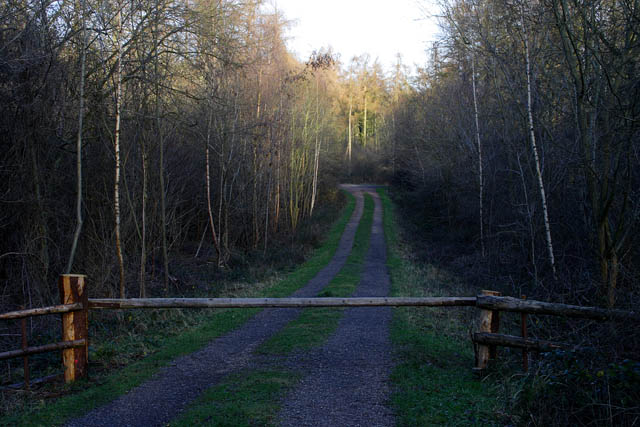 Forestry road, Bourne Wood