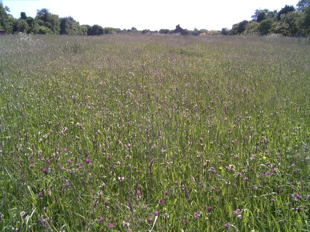 Meadow, Fen Ditton