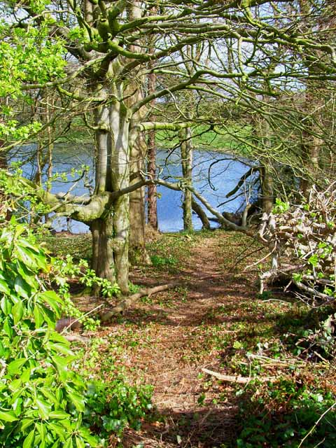 Woodland adjoining Soulseat Loch