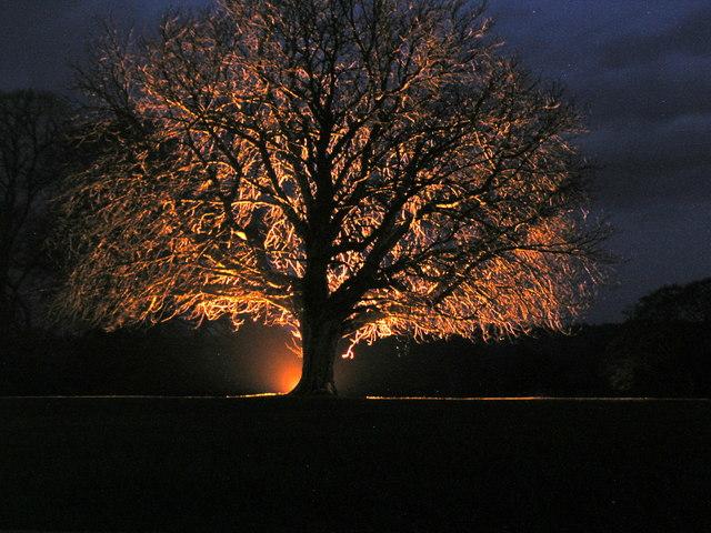 Swinton Park Tree by night