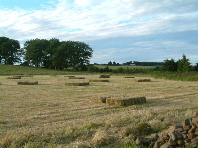 Hay bales, Greenknowe Farm