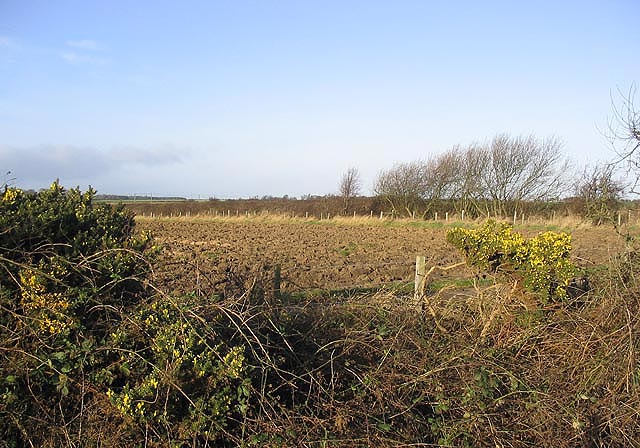 Gorse and ploughed field