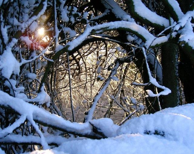 Hedgerow in winter