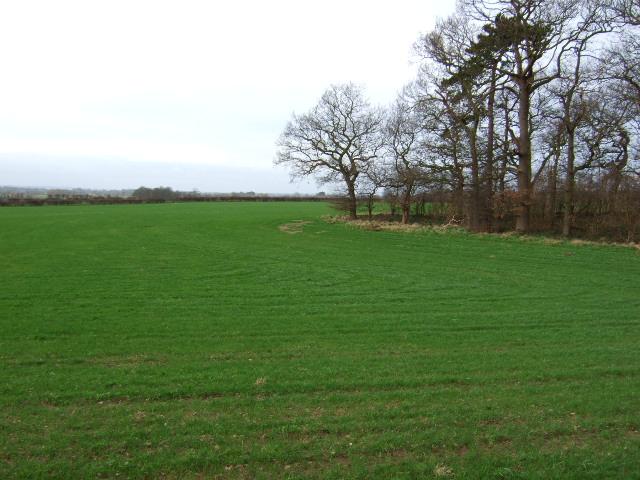 Brown Cross Plantation