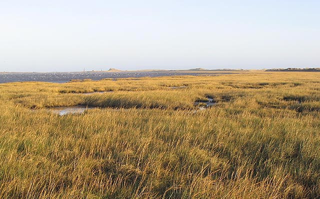 Lindisfarne National Nature Reserve:: OS grid NU1237 :: Geograph ...