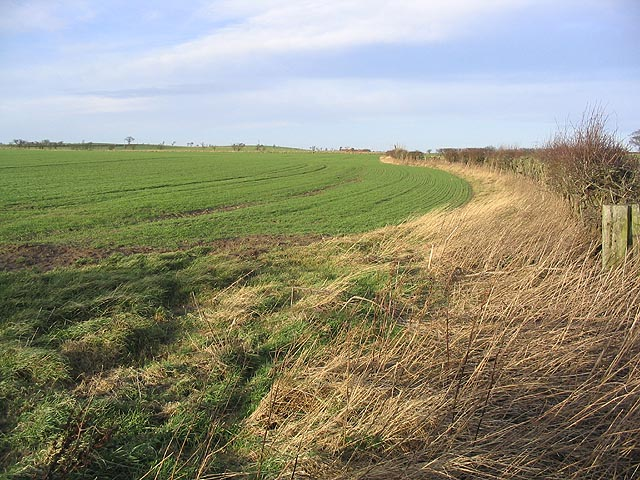 Arable field and set aside strip