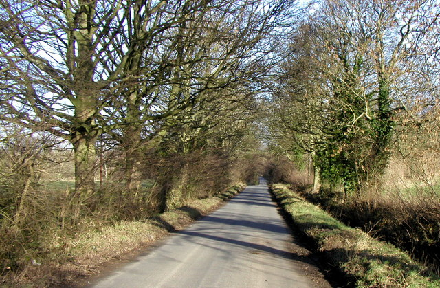 Avenue of trees near Swinton Park