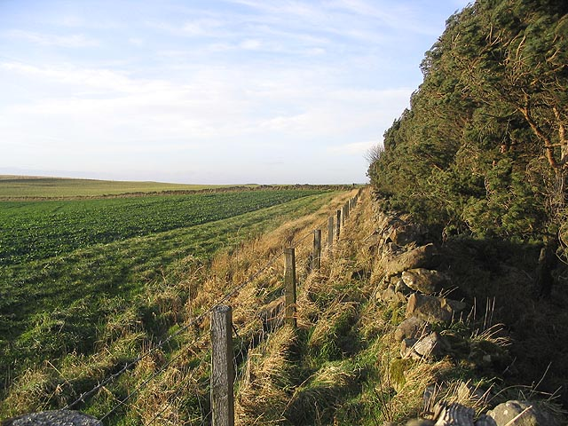Field-woodland boundary
