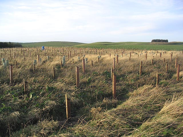 Tree planting on Horton Moor