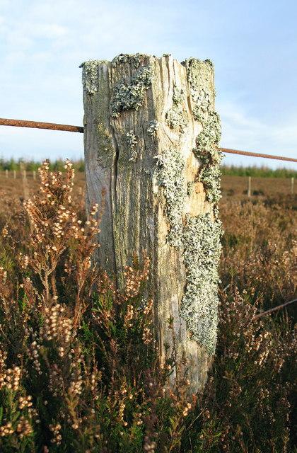 Fencepost, Long Moss, Coldingham Common