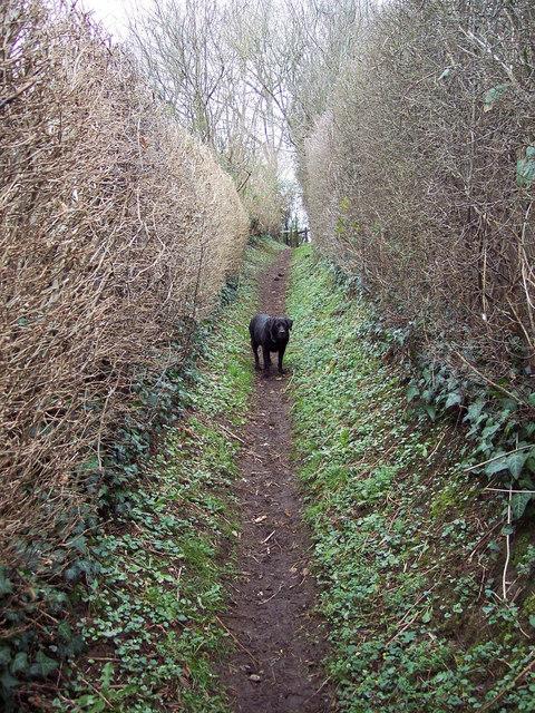 Hedged Footpath