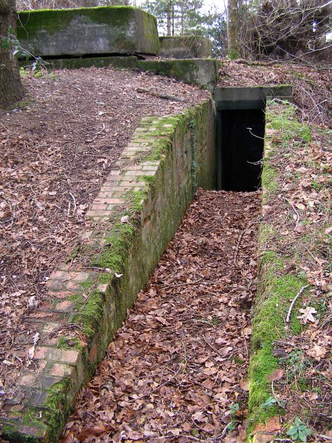 Su1608 : second world war bunker in newlands plantation, new forest