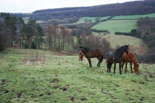 Pasture Above Lunshaw Beck
