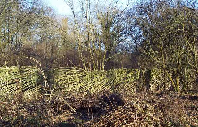 Hurdle Fencing at Garston Wood