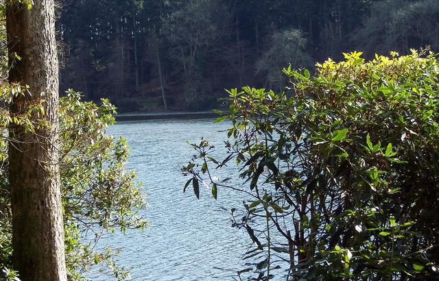 Shear Water through the Trees