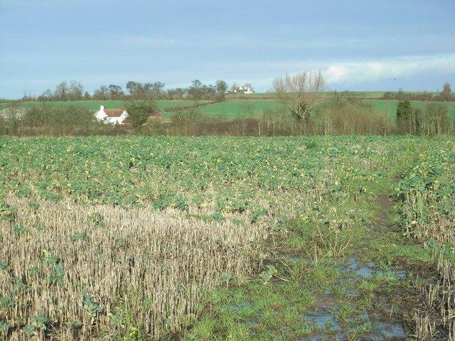 Towards Middlehurst Farm