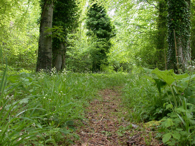 Path in Chappetts Copse