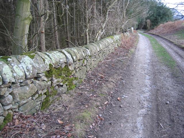 Stone Wall at Gwysaney