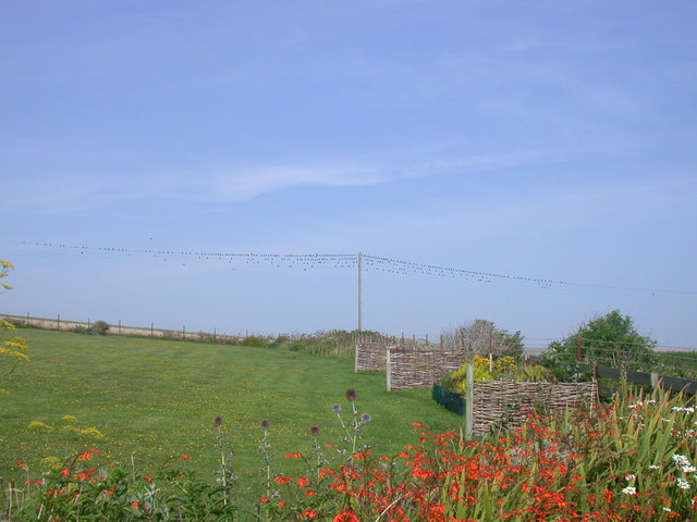 Starlings on the line