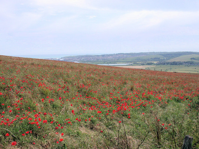Poppies on Itford Hill