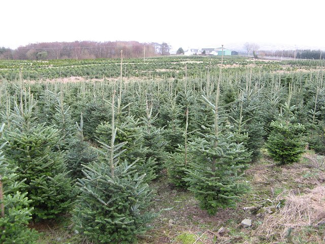 Garrocher Tree Farm