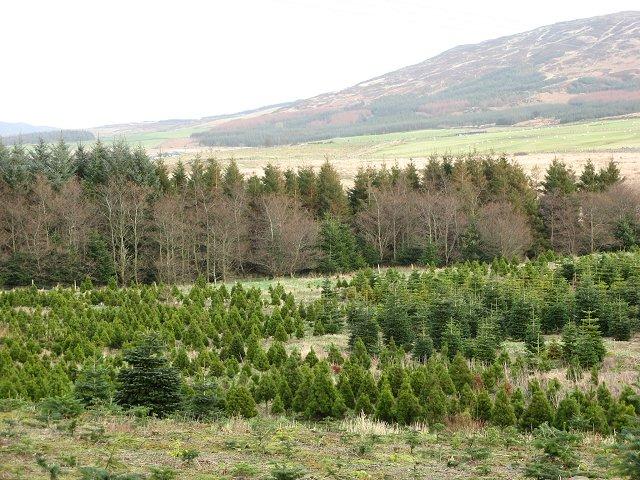 Garrocher Tree Farm