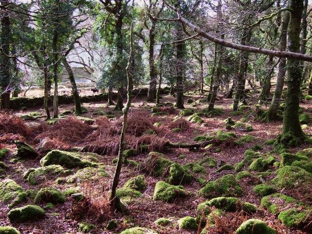 Nelder Wood