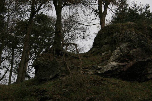 Exposed roots and rock in the quarry on the Knock, Biggar