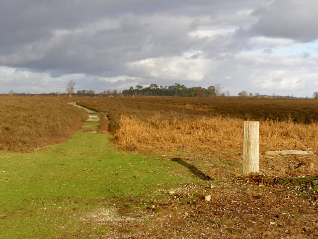 Path from Newlands Plantation through Ibsley Common, New Forest