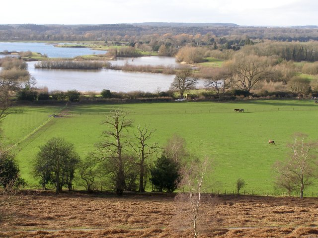 View west from Ibsley Common, New Forest