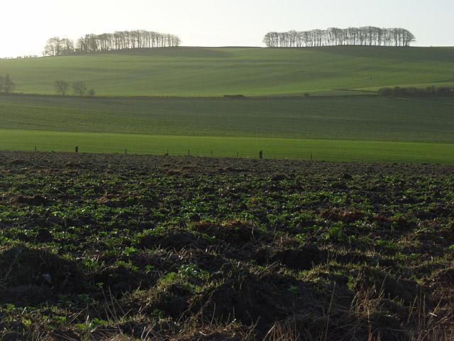 Childrey Field