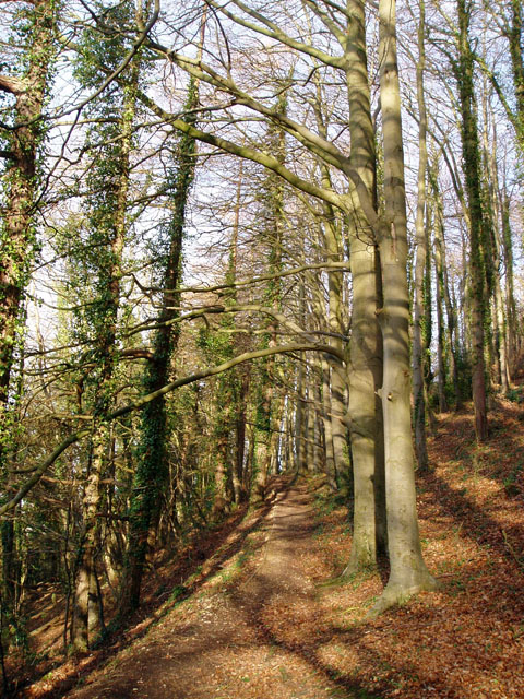 Cotswold Way path through Pen Wood