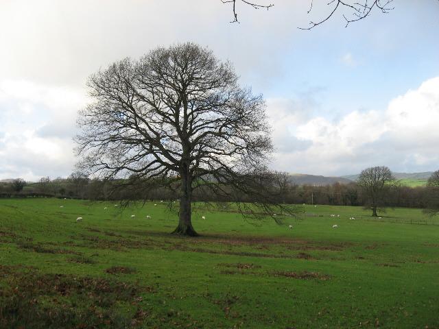 A Specimen Tree
