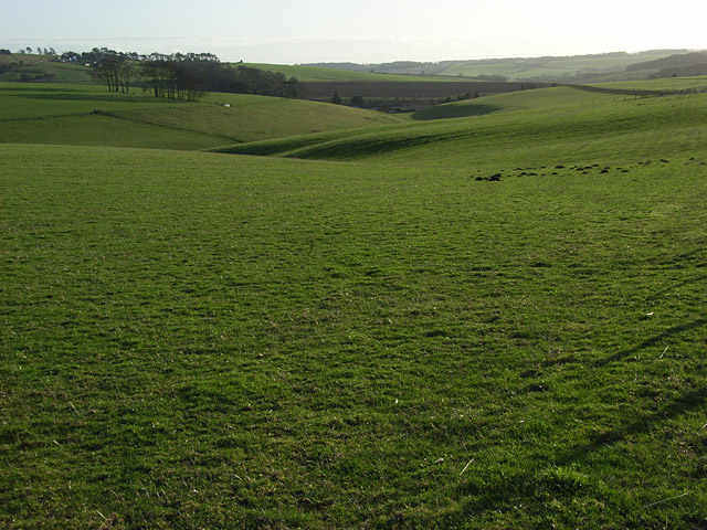Wormhill Bottom