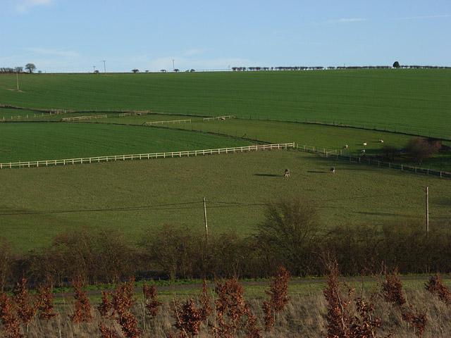 Farmland near Lambourn