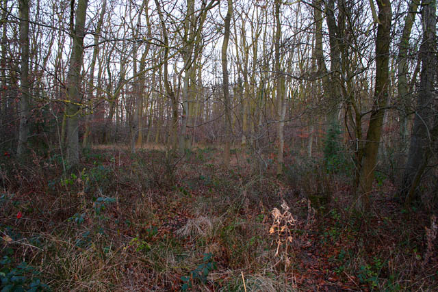 In Callan's Lane Wood