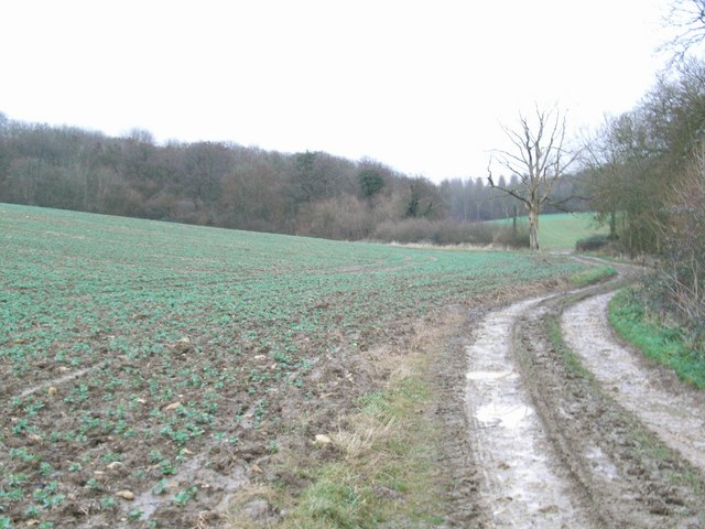 Track past Long Compton Woods