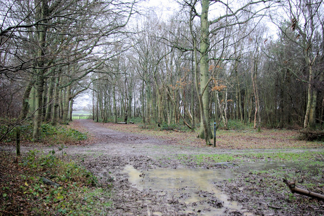 Bridleway through Glyndebourne Wood